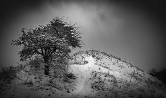 _DSC2023 (Durham George) Tags: snow tree hill slope mountain