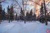 Evening at a park 5 (Kasia Sokulska (KasiaBasic)) Tags: canada alberta edmonton rundle park winter evening snow trees landscape cold river valley