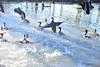 Swim time! (Matthew P.L. Stevens) Tags: duck ducks birds fly flying splashing pond garden kariya park mississauga