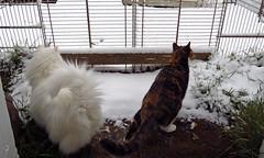 Look at that! (BlueRidgeKitties) Tags: canonpowershotsx40hs cat snow