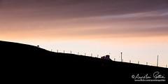 Ballyhillin, le mouton sur la colline (Aurelien Pottier) Tags: ardmalin silhouette paysage landscape mouton sheep farm ferme clôture fence malinhead rural countryscene horizontal irlande ireland europe westerneurope europedelouest républiquedirlande republicofireland cloud ciel sky nuage ballyhillin countydonegal ie
