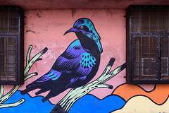 Lodhi Art District (Mivr) Tags: india newdelhi delhi in art district lodi bird graffitti street d850