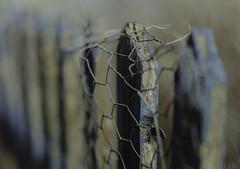 the allotment... (jess feldon photography) Tags: hff happyfencefriday fence dof depth texture paint tetbury jessfeldon lookslikefilm