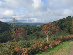 Autumn in Teign Gorge, from Hunter's Path (Philip_Goddard) Tags: europe unitedkingdom britain british britishisles greatbritain uk england southwestengland devon dartmoornationalpark drewsteignton teignvalley teigngorge hunterspath views scenery landscapes valley hill woodland wood autumn