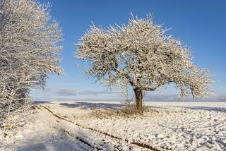 *sunny winter morning*