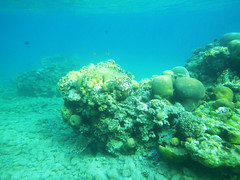 Coral (Dumby) Tags: fish princessbeach israel eilat nature redsea water sea