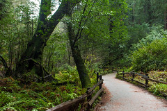 Muir Woods (ChangingLightPhotography) Tags: green muirwoods nationalmonument redwoods redwoodforest sanfrancisco california