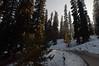 Road to Gulmarg (oli murugavel) Tags: gulmarg kashmir jammuandkashmir sunrays beautiful nature olimurugavel travel india nikonflickraward