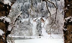 Solitude 2018 (arno18☮) Tags: chiesetta chapelle saintbruno lacdevallon france hautesavoie rhônealpes bellevaux hirmantaz laghetto nature hiver neige glace arbres harmonie solitude blanc lumière