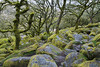 Wistman's Wood (Christian Hacker) Tags: wistmanswood dartmoor nationalpark oak trees forest granite moss ancient devon canon eos50d tamron 1750mm naturalnaturereserve woodland sssi specialareaofconservation historic history magical gnarly knobbly mysterious boulders mossy fern nature hiking outdoors explored explore
