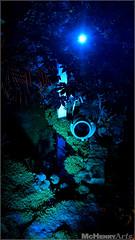 Enchanted Gardens 2017 - 139 (mchenryarts) Tags: arcen dunkelheit entertainment event events farbe fotojournalismus kasteeltuinen laternen licht lichtinszenierung lichtspektakel niederlande parkleuchten photojournalism schloessgaerten show garten laser lasershow