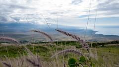 Waimea (51) (BoyUtot) Tags: waimea waimeavalley bigisland hawaii waimeafarmersmarket roadtrip panasonicgh1 lumix 100300mm ramesesmendoza travel nature landscape