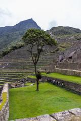 Machu Picchu 78
