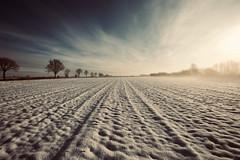 wo sich Fuchs und Hase Gute Nacht sagen... (kuestenkind) Tags: feld schnee sonne