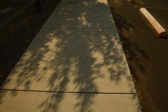 solar_eclipse_trees