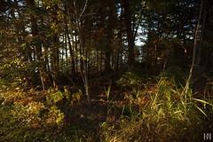 Automne (NeoNature) Tags: canon nature scenery scene landscape paysage quebec canada sunset light coucher soleil vegetation arbres trees wood bois