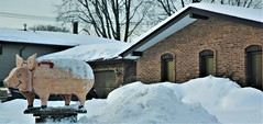The Piggy And The Snowmound (OrlandParkBirdieGirl) Tags: mailbox piggy oinker pig funny cheerful comical houses sky car vehicle