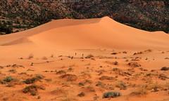 Doing the Dunes (arbyreed) Tags: arbyreed sand sanddunes coralpinksanddunes ripples sandy kanecountyutah brush sage rabbitbrush largesanddune
