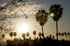 Good Intentions (PhoebeMeador) Tags: sunset landscape birds trees palmtrees sky orange sun silhouette nature tree sunflare california losangeles