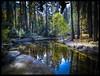 Nature - Park Yosemite - California (fabrizio.silvani.ph) Tags: legno foresta acqua albero erba ruscello parco usa natura nature parcoyosemite yosemite verde