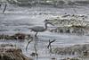 IMG_9715 (armadil) Tags: mavericks beach beaches californiabeaches bird birds egret egrets snowyegret snowyegrets