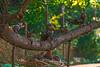 Stiftspark Die Raben (fotofrysk) Tags: art sculpture dieraben byartistingridkraloven abbeystiftspark easterneuropetrip melk austria oesterreich afsnikkor703004556g nikond7100 20109288781