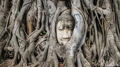 Ayutthaya - 15 (Lцdо\/іс) Tags: ayutthaya thailande thailand travel thailandia thai lцdоіс trip treking temple buddha tree buddhisme historic old voyage traditionnal place must see wat phra mahathat siam capital birman