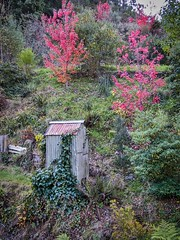 A View With A Loo (gecko47) Tags: outhouse toilet loo hillside autumn walhalla alpinevictoria goldmining heritage historic restoration tourism deciduous