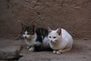 🐱🐱Stay together🐱🐱 (ricardopardie123) Tags: animal cat kitty white black cute adorable lovely nature wall sitting meow godscreation pet