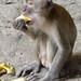 A monkey at Batu Caves, Malaysia