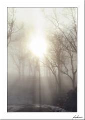 Luz para un frío domingo de invierno (V- strom) Tags: invierno winter sol sun luz light sunbeam árbol tree frío cold texturas textures concepto concept nikon2470 nikon nikon70300 nikond700 recuerdo memory naturaleza nature paisajes landscape cielo sky niebla fog vstrom