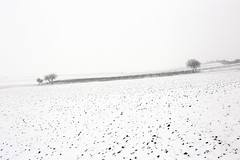 No winter without snow (verblickt) Tags: countryside farmland winterscene white snow cold cellars fields snowing