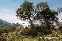 canion laranjeiras-13 (CARLOS_HP) Tags: arvore alvorada bomjardimdaserra canionlaranjeiras mardenuvens nuvens panoramica picos santacatarina sobreasnuvens
