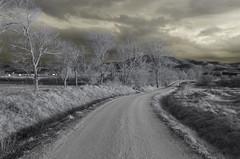 Yellow world (IñigoMerino) Tags: ir 720nm full spectrum camera
