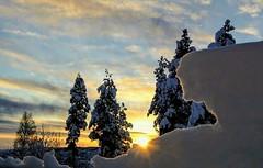 Sunrise (janrs7) Tags: winterwonderland winterview view trees december porch norway earlylight morninglight sky sunrise afsnikkor1855mmf3556