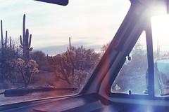 (wrenee.com) Tags: 2017 35mm 800 film canonae1 cinestill800t december saguaro tucson arizona saguaronationalpark desert 800t cinestill westfalia vanagon vanlife pakonf135