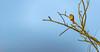 I'm Waiting... (matthew0310851) Tags: bourgoyenossemersen gand marais oiseaux rapace buzard observation nature ornithologie canon 1dxmkii prairie matin belgique flandres