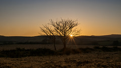 sunset through trees #2 (HHH Honey) Tags: sonya7rii minimoonxviii devon 50mm sonyf1450mmlens trees sunset dartmoor landscape