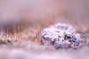 Terre lunaire (jade_or89) Tags: macro mousse d7000 sigma105mm macrophoto macrodreams bokeh