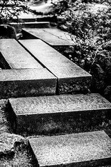 Shadows in the Decisions (Thomas Hawk) Tags: america oregon pdx portland portlandjapanesegarden usa unitedstates unitedstatesofamerica washingtonpark westcoast bw stairs us fav10