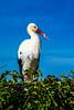 DSC_6364.jpg (b0n2a1) Tags: 2017 grandcirclecruiseline hunawihr naturoparcexcentredereintroduction rhineriver routederibeauville storks animalpark swanmvrhapsody