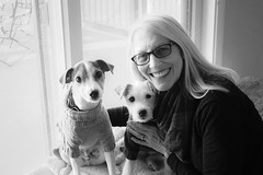 Posing with Maddy and Dooley, B&W (marylea) Tags: dec27 puppies 2017 parsonrussellterrier parsonrussell terrier terriers maddy dooley sweater dog dogs blackandwhite blackwhite bw winter jackrussellterrier jackrussell jrt prt