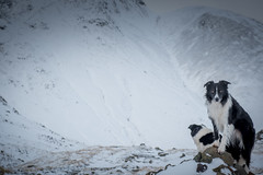 3/52 A  day out with Auntie Elk in the Mountains (JJFET) Tags: 3 52 weeks for dogs paddy border collie dog sheepdog mountain