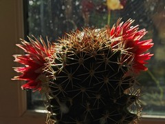 Prickly Beauty (Deepgreen2009) Tags: plant flower danger spikes prickles