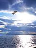 Jonathan segull II (kazs2307) Tags: sea seagull sky cloud twilightray 海 カモメ 空 雲 薄明光線
