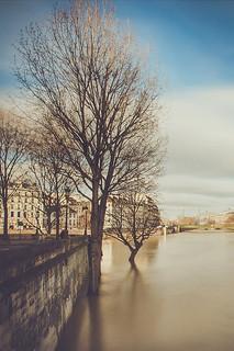 Les arbres ont les pieds dans l'eau
