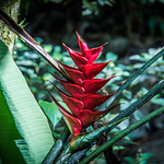 2017 - Regent Cruise - Martinique - Plant Life thumbnail