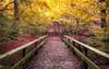 The Dingle, Warrington (Lost Light) Tags: wdcc warrington woodland footpath autumn