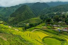 Terasy na procházce kolem Sapa (zcesty) Tags: vietnam24 terasa pole krajina hory vietnam sapa dosvěta làocai vn