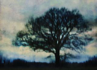 Oak tree on a wet evening